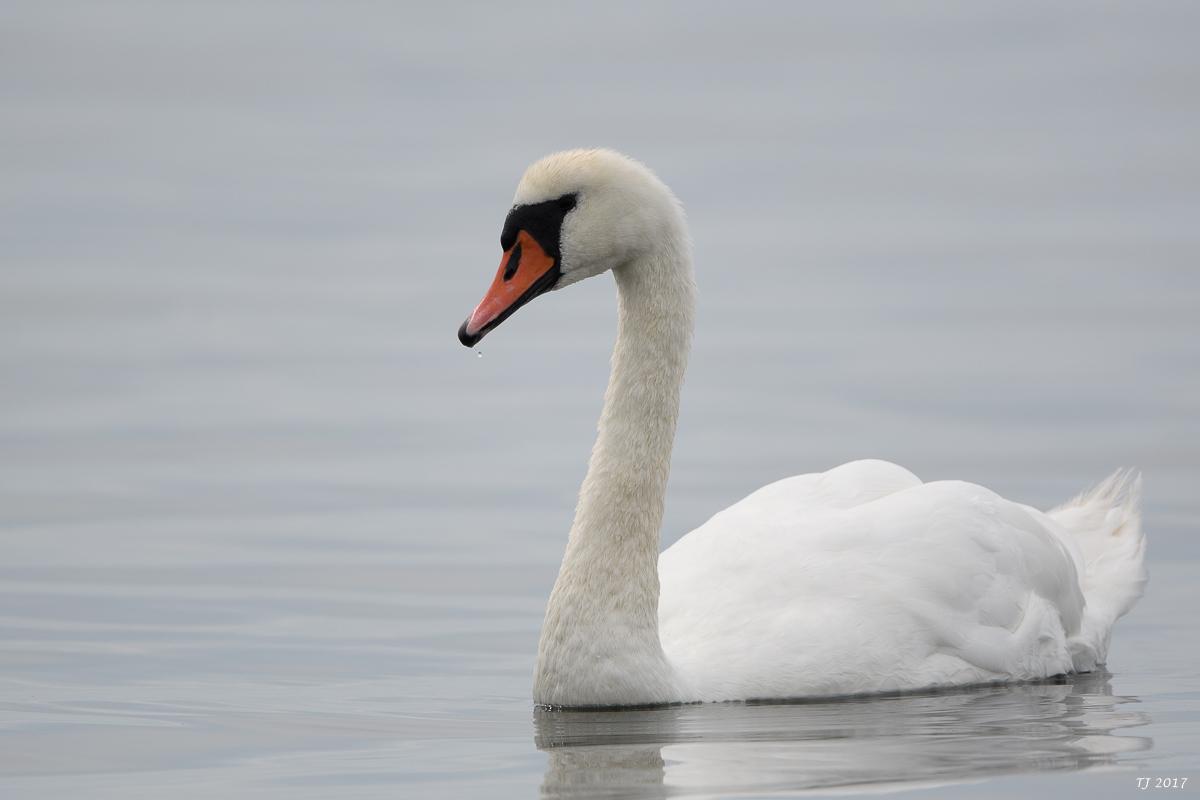 Ein Streifzug durch Ölands Vogelwelt