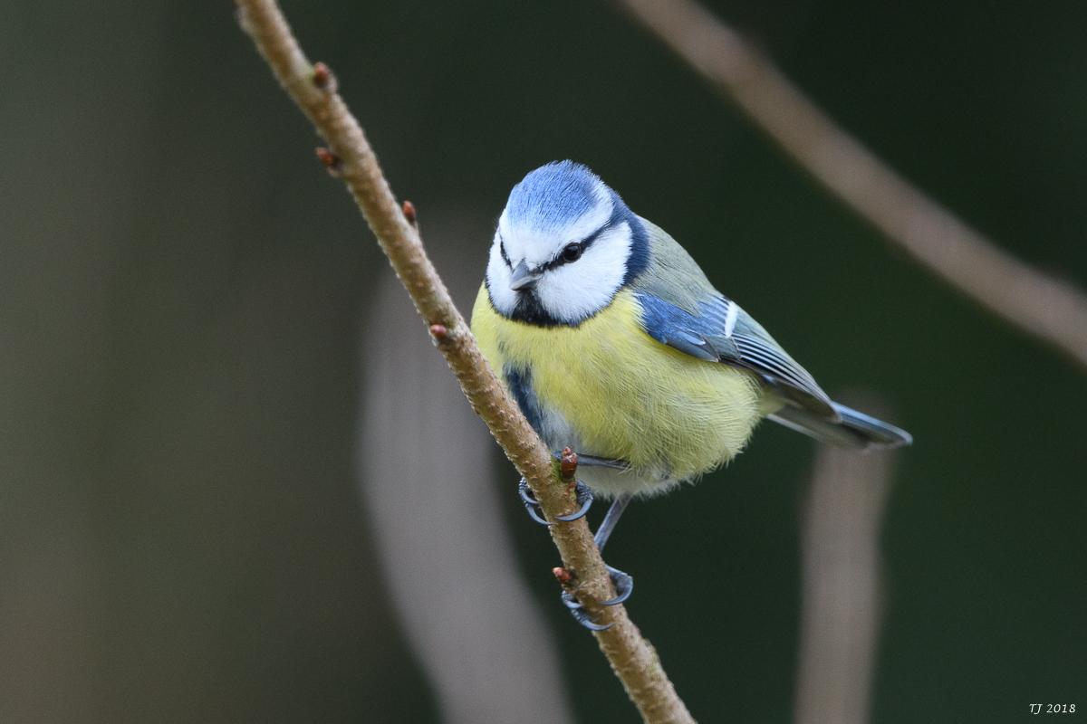 Zeigt her eure Vögel ...